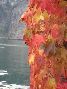 Некои есени носат многу надеж…